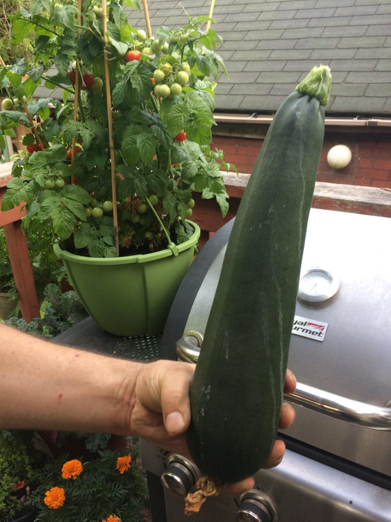 Holding a very large Zucchini