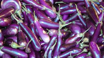 Lots of Chinese Eggplants