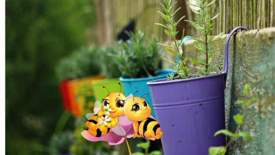 companion planting with two bees on flower