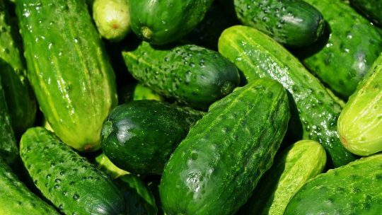 lots of cucumbers
