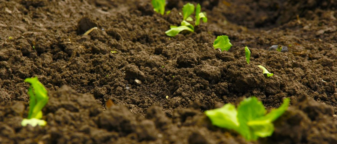 fresh soil with new plants