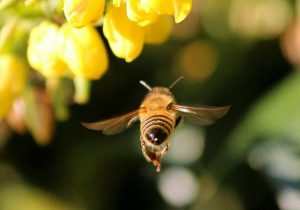 How to Attract Bees to Your Container Garden