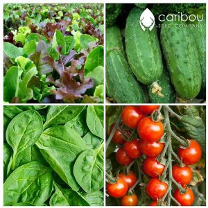 Summer Salad Garden by Caribou Seed Company - Canadian Seed Kit - 4 Vegetables