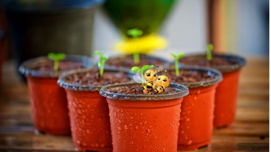 seeds in red cup containers with two bees